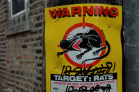 Combating rats in Chicago