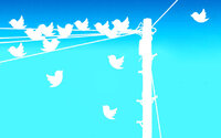Twitter birds on telephone line