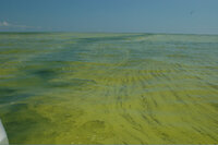 Lake Erie blue-green algae