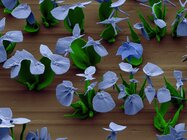 Microscopic sculptures of flowers
