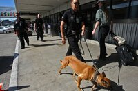 LAPD officer walks with a bomb sniffing dog at LAX Terminal 3