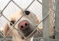 Dog behind a fence at an animal shelter