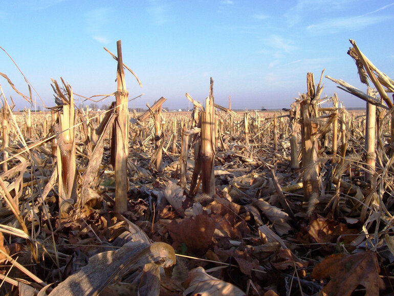 A Scott County, Iowa, cornfield after the harvest
