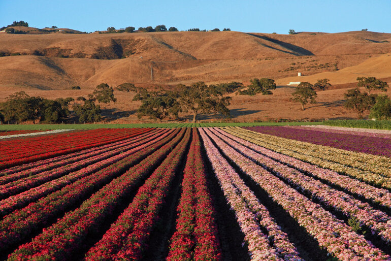 Gilroy, Calif., fruit farm