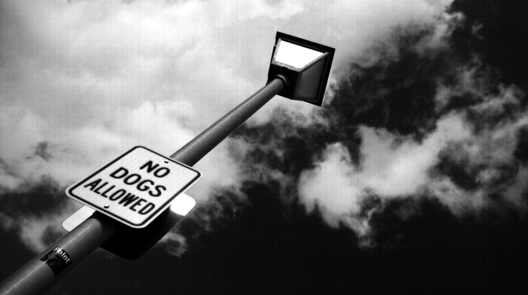 No Dogs Allowed sign on a streetlight in black and white
