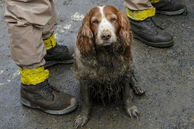 A search dog waits by the feet of Washington National Guardsmen